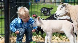 Op de kinderboerderij van het Natuurcentrum wonen échte boerderijdieren, dat maakt een bezoek aan onze boerderij een bijzondere ervaring voor jong en oud. Je kunt de dieren komen knuffelen, voeren, of verzorgen en als je op vakantie gaat, mag jouw huisdier bij ons logeren!  Het restaurant van het Natuurcentrum bezoek je voor het heerlijke eten, de gezellige sfeer én het unieke personeel. Bij lekker weer zit je heerlijk op het terras met uitzicht op de dierenweide of aan de vijver.